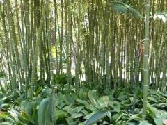 bambusgarten-in-elche