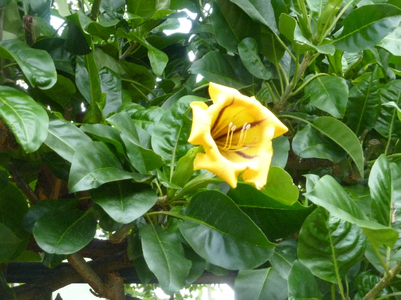 bluetenbracht-im-botanischen-garten