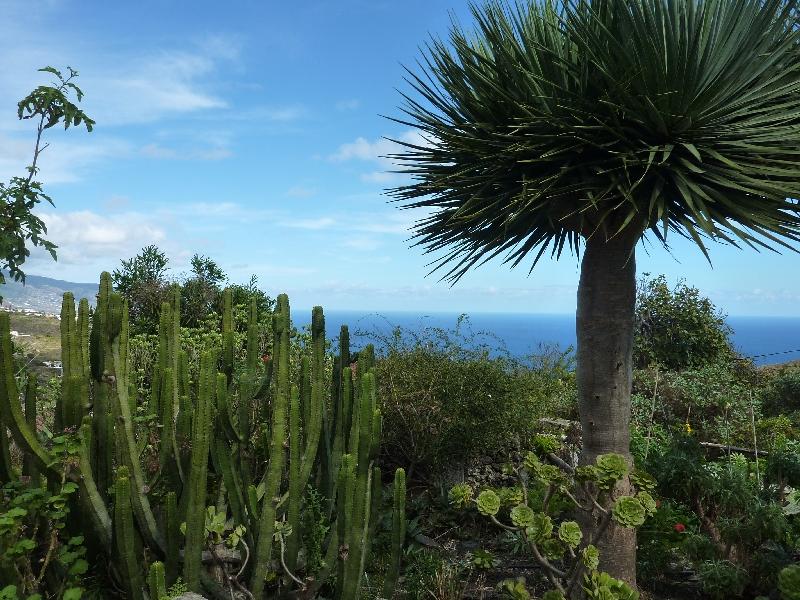 kanarische-vegetation