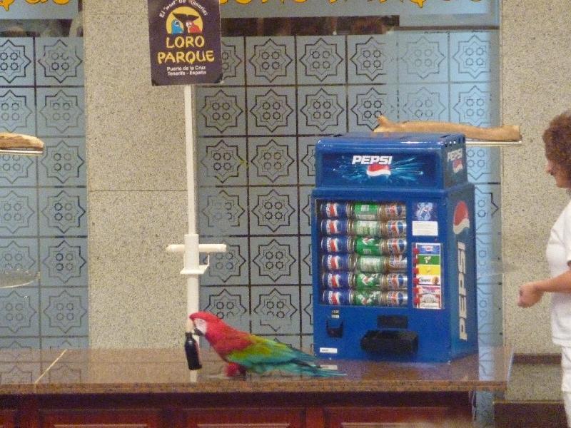papagei-beim-cerveza-trinken