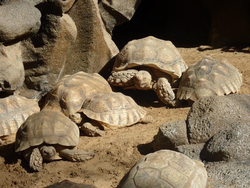 schildkroetenfamilie