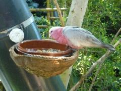 artenreiche-papageiensammlung_0