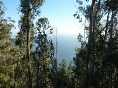 eukalyptuswald-800px