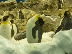 pinguien-beim-schlafen