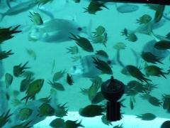 unterwasserwelt-von-lanzarote