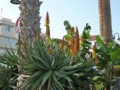 vegetation-in-puerto-de-la-cruz-800px