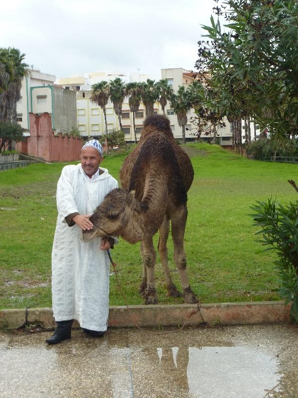 zwei-kamele